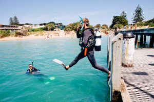 Bayplay Adventure Tours | Mornington Peninsula | Diving | Dive | Diving Course | Scuba | Scuba Dive | Scuba Dive Course | Diving Course | Diving License | Scuba Diving | Group Diving | Diving School | Diving Lessons | Padi | Padi Diving Course | Padi Open Water Diving Course | Learn To Dive | Learn To Dive Course | Diving Courses | Mornington Peninsula | Diving Mornington peninsula | Diving Melbourne| Seadragon | Seadragons | Sea Dragons | Dive For Sea Dragons | Sea Dragons Mornington Peninsula | Sea Dragon Diving